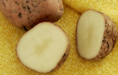 Картофель. Польза картофеля. Свойства картофеля